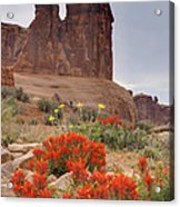 Indian Paintbrush And The Three Gossips Acrylic Print
