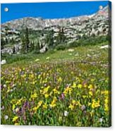 Indian Peaks Wildflower Meadow Acrylic Print