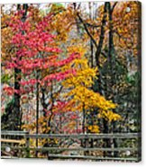Indiana Fall Color Acrylic Print by Alan Toepfer