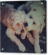 Indie And Cea Mother Son  Acrylic Print