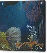 Indigenous Aquatic Creatures Of New Guinea Acrylic Print by Beth Dennis