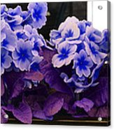 Indigo Flowers Acrylic Print