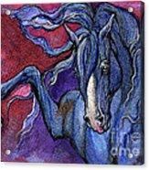 Indigo Horse 1 Acrylic Print