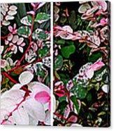 Indigo Plant In Stereo Acrylic Print