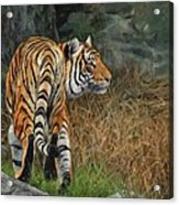 Indo-chinese Tiger Acrylic Print