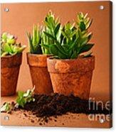 Indoor Plant Acrylic Print