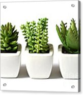 Indoor Plants Acrylic Print by Boon Mee