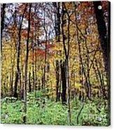 Infared Fall In Indiana Acrylic Print