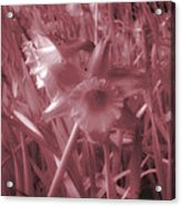 Infra-red Daffodils Roath Park Cardiff Acrylic Print