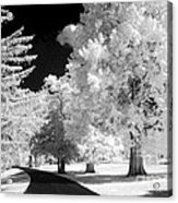 Infrared Delight Acrylic Print