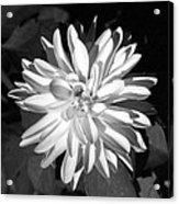 Infrared - Flower 03 Acrylic Print