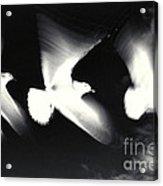 Infrared Gulls Acrylic Print