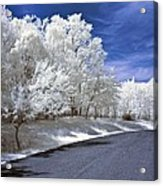 Infrared Road Acrylic Print by Anthony Sacco