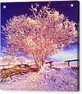 Infrared Tree Acrylic Print