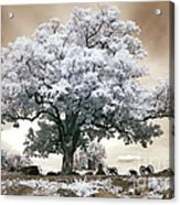 Infrared Tree On A Hill In Gettysburg Acrylic Print by Paul W Faust -  Impressions of Light