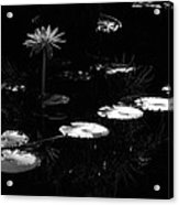 Infrared - Water Lily And Lily Pads Acrylic Print