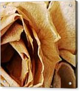 Inner Beauty Acrylic Print by Tanya Jacobson-Smith