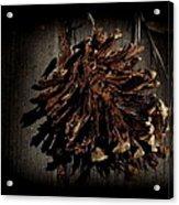 Inner Pine Cone Acrylic Print