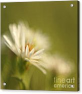 Innocence - Original Acrylic Print