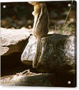Inquisitive By Nature Acrylic Print
