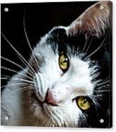 Inquisitive Kitty Acrylic Print
