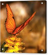 Insect - Butterfly - Just A Bit Of Orange  Acrylic Print