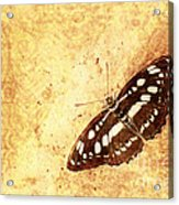 Insect Study Number 66 Acrylic Print