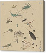 Insects C1825 Acrylic Print