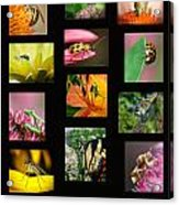 Insects Collage Acrylic Print