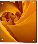 Inside A Yellow Rose Acrylic Print