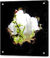 Inside Looking Out Acrylic Print