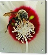 Inside The Flower Acrylic Print