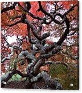Inside The Japanese Maple Acrylic Print