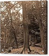 Interesting Tree Acrylic Print