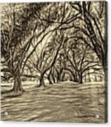 Into The Deep South - Paint 2 Sepia Acrylic Print