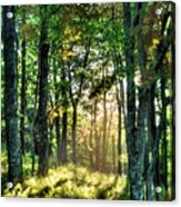 Into The Light II - Blue Ridge Parkway Acrylic Print