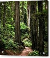 Into The Magical Forest Acrylic Print