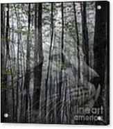 Into The Woods Acrylic Print
