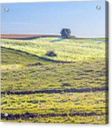 Iowa Farm Land #1 Acrylic Print