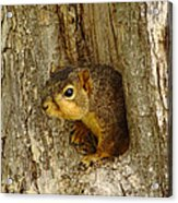 iPhone Squirrel In A Hole Acrylic Print