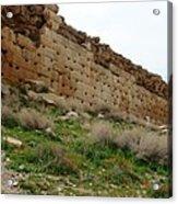 Iran Poppies At Pasargadea Acrylic Print