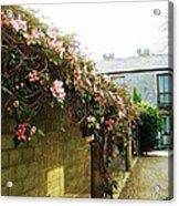 Ireland Floral Vine-topped Brick Wall Acrylic Print
