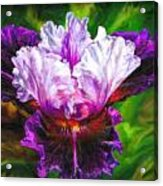Iridescent Iris Acrylic Print