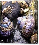 Iridescent Purple Seashells Acrylic Print