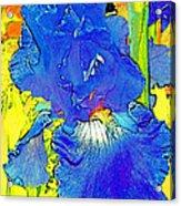 Iris 10 Acrylic Print