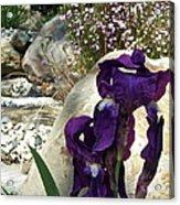 Iris 14 Acrylic Print