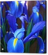 Iris 2 Acrylic Print