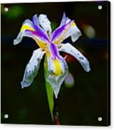 Iris 2012 Acrylic Print