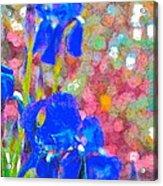 Iris 22 Acrylic Print
