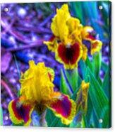 Iris #58 Acrylic Print